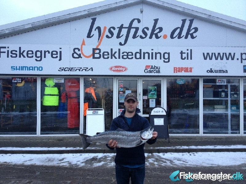 Havørred på 77 cm og 5.30 kg fra Ydrekysten Djursland , Østjylland -  fanget på Blink # 1573