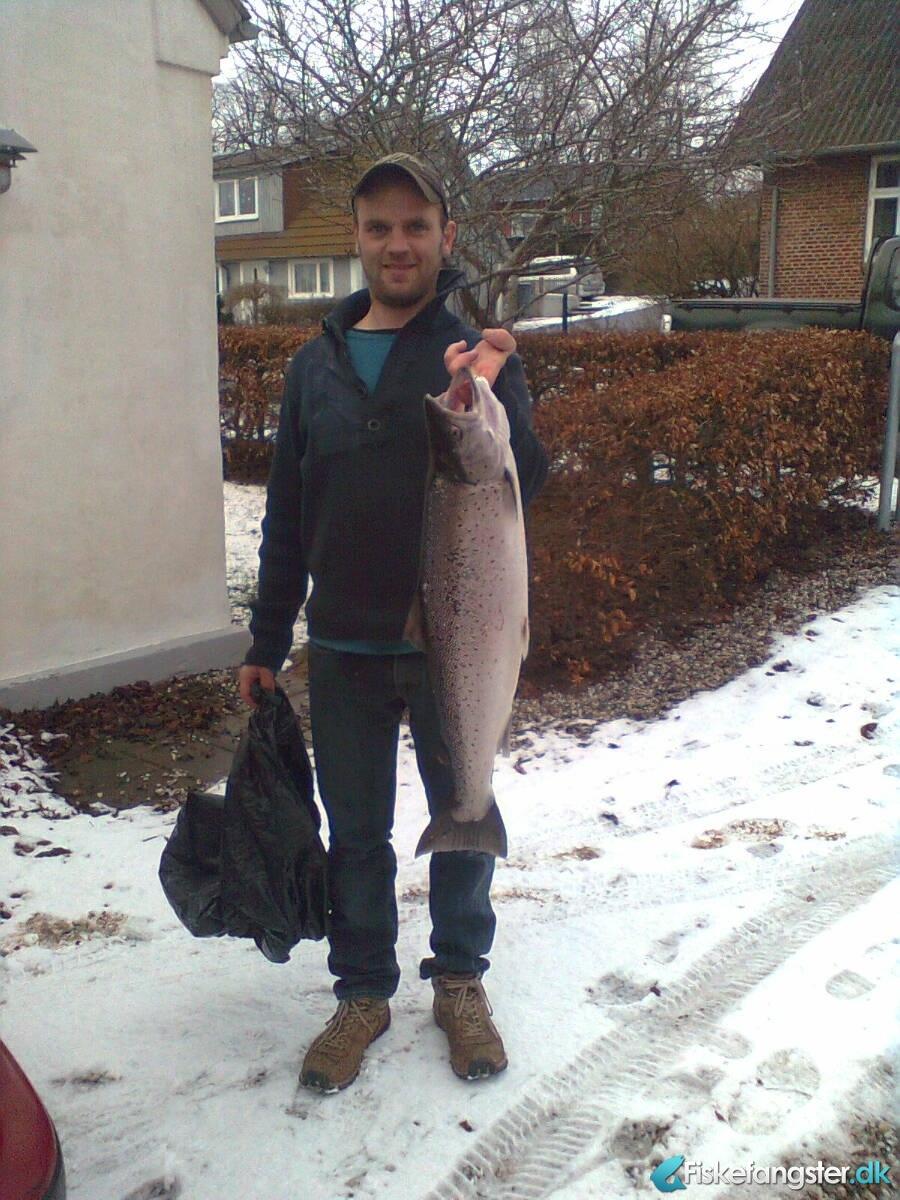 Havørred på 77 cm og 5.30 kg fra Ydrekysten Djursland , Østjylland -  fanget på Blink # 1596