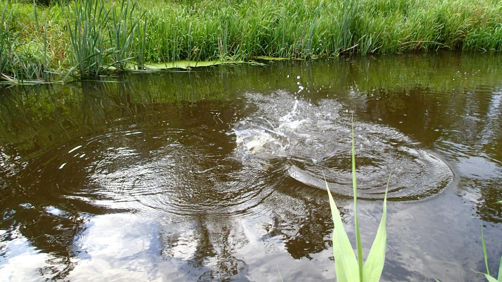 Havørred på 61 cm og 2.80 kg fra Den lille å, Østjylland -  fanget på Spinner # 6825