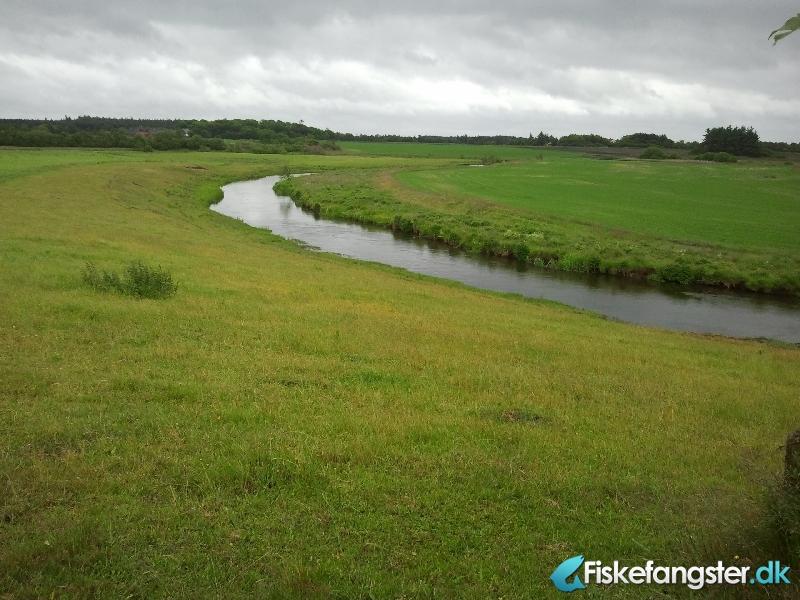 Laks på 106 cm og 13.00 kg fra Vorgod å opstrøms jernbanebroen, Vestjylland -  fanget på Spinner # 886
