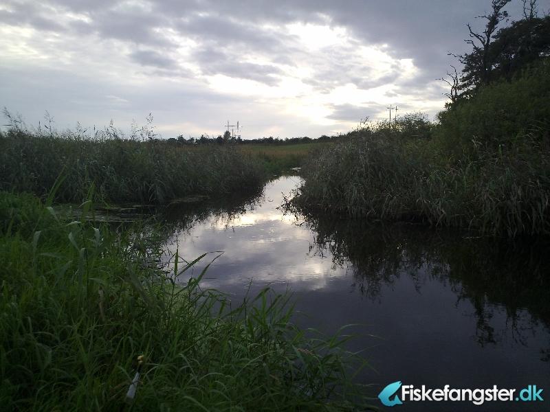 Havørred på 64 cm og 3.10 kg fra Lille østjysk å, Østjylland -  fanget på Spinner # 1050