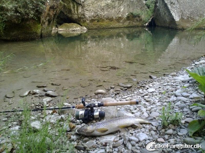 Bækørred på 30 cm og 250 gram fra Vomanofloden i Italien, Udlandet -  fanget på Spinner # 139