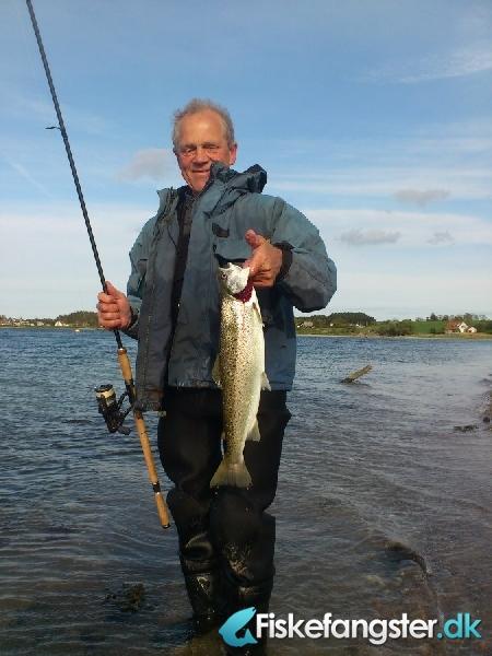 Havørred på 51 cm og 1.60 kg fra Begtrup Vig, Østjylland -  fanget på Blink # 823