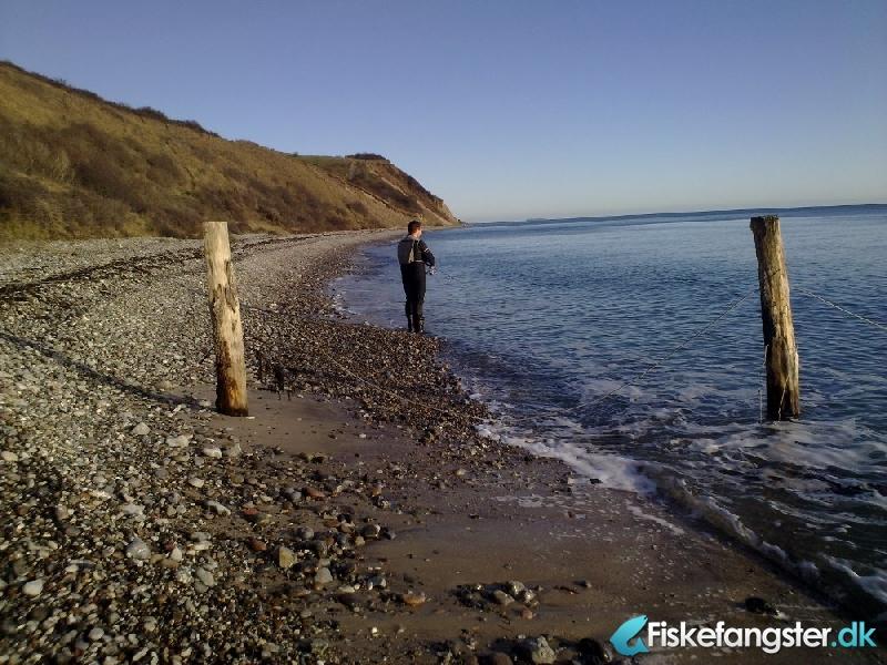 Havørred på 44 cm og 0.90 kg fra Sletterhage, Helgenæs, Østjylland -  fanget på Blink # 407