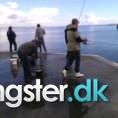Makrel på 28 cm og 300 gram fra århus havn, Østjylland -  fanget på Makrelforfang # 1265
