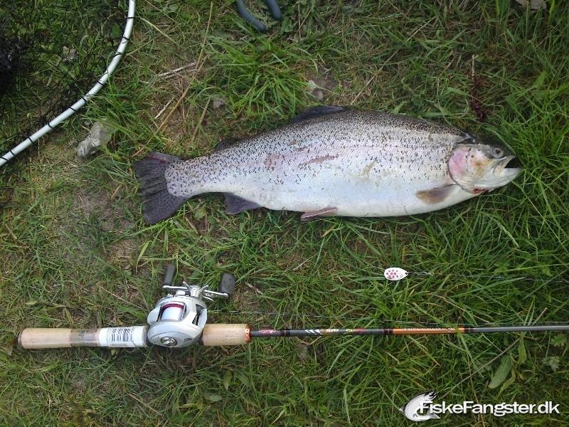 Regnbueørred på 70 cm og 4.95 kg fra Tusaagaard p&t, Midtjylland -  fanget på Spinner # 53
