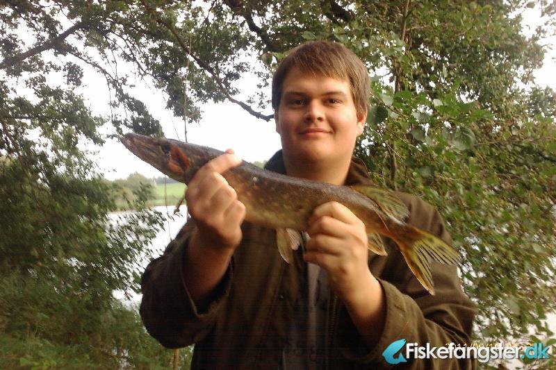 Gedde på 0.90 kg fra privat sø, Østjylland -  fanget på Spinner # 225