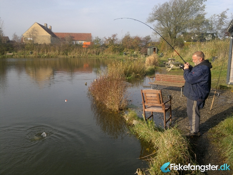 Regnbueørred på 43 cm og 1.00 kg fra hvorupgård fiskepark, Midtjylland -  fanget på Orm # 292