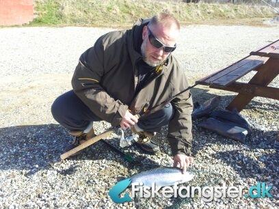 Regnbueørred på 61 cm og 2.80 kg fra Medestedet, Nordjylland -  fanget på Powerbait # 676