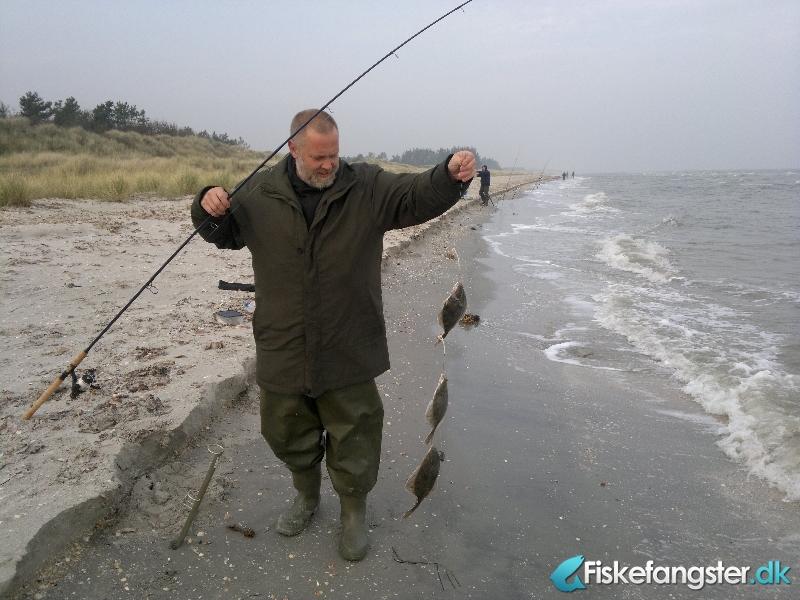 Skrubbe på 37 cm fra Flagvej , Nordjylland -  fanget på Reje # 307