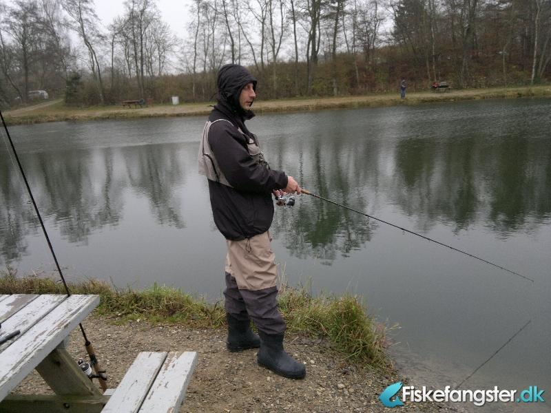 Regnbueørred på 53 cm og 2.20 kg fra Medestedet, Nordjylland -  fanget på Orm # 338