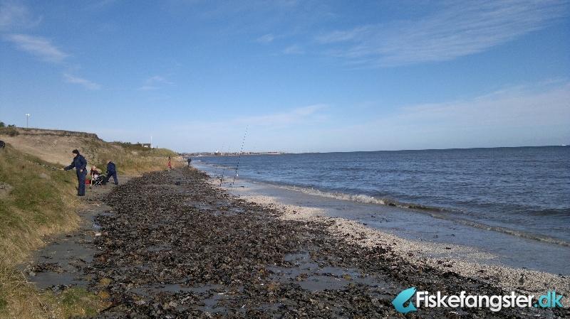 Skrubbe på 25 cm fra sæby, Nordjylland -  fanget på Sandorm # 255