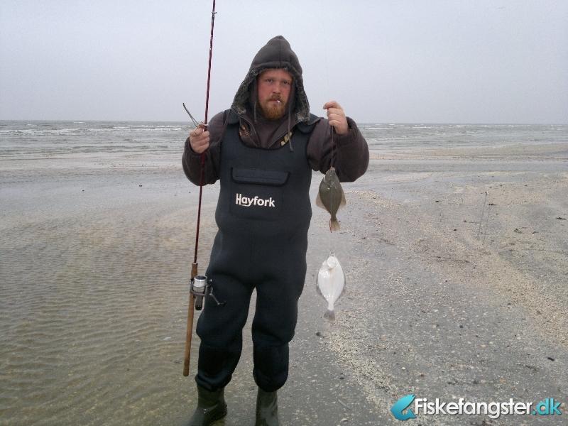 Skrubbe på 37 cm fra Flagvej , Nordjylland -  fanget på Reje # 308