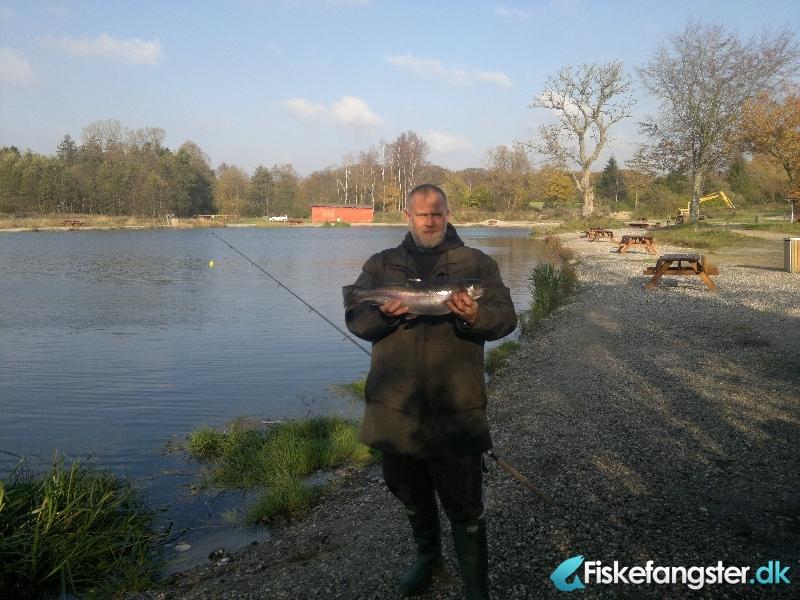 Regnbueørred på 53 cm og 1.90 kg fra Medestedet, Nordjylland -  fanget på Spinner # 281