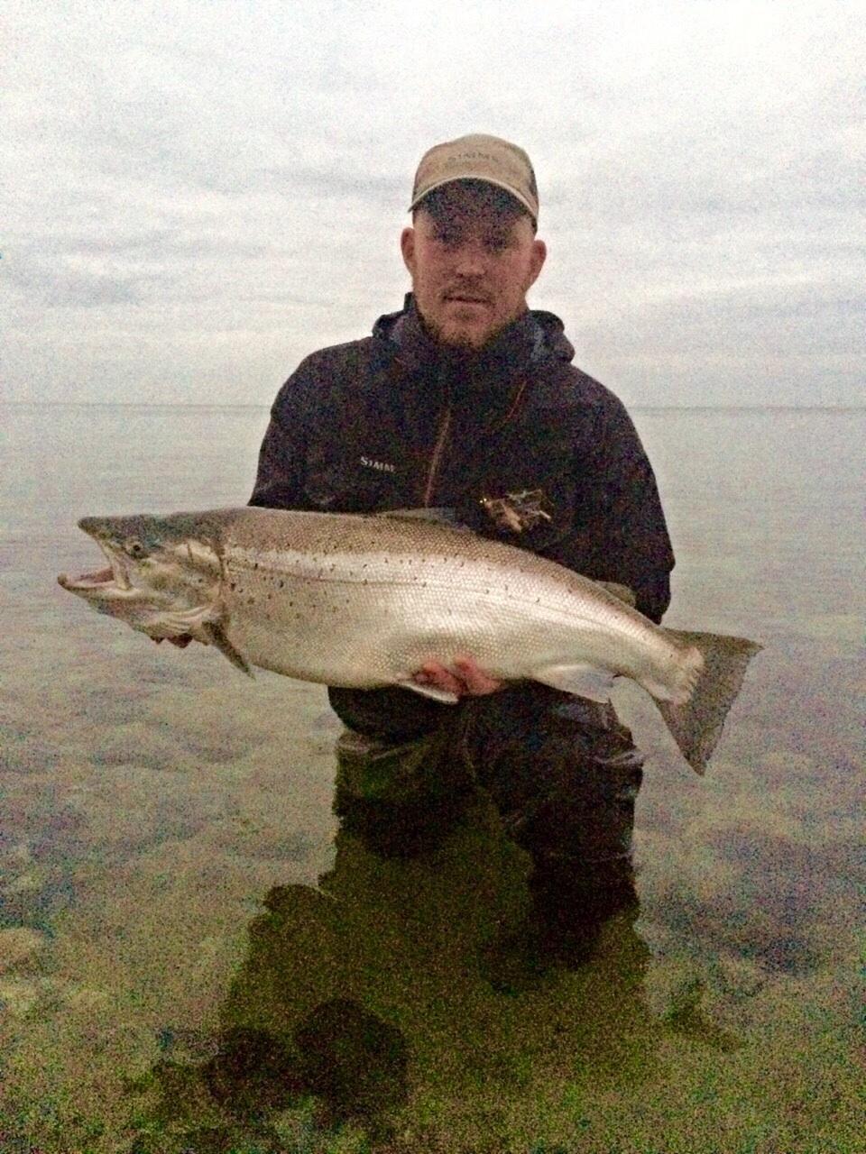 Havørred på 84 cm og 8.64 kg fra Stevns, Sjælland -  fanget på Kobberbassen # 5113