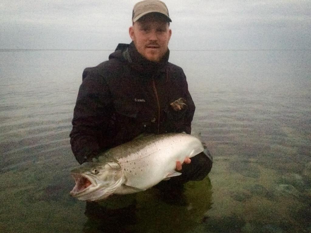 Havørred på 84 cm og 8.64 kg fra Stevns, Sjælland -  fanget på Kobberbassen # 5116
