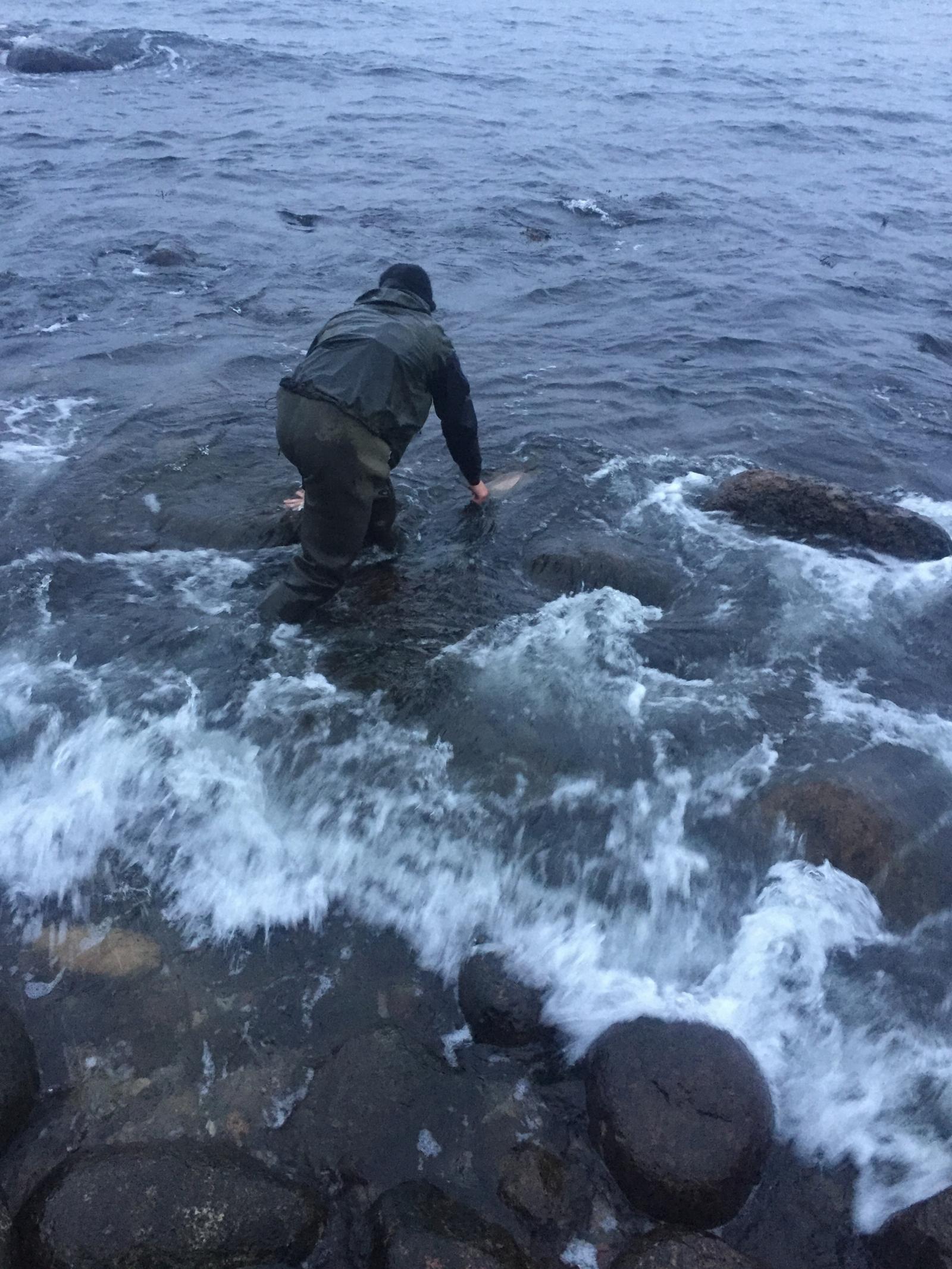 Havørred på 61 cm og 2.70 kg fra Sydkysten, Bornholm -  fanget på SG Sandeel 19g # 7086
