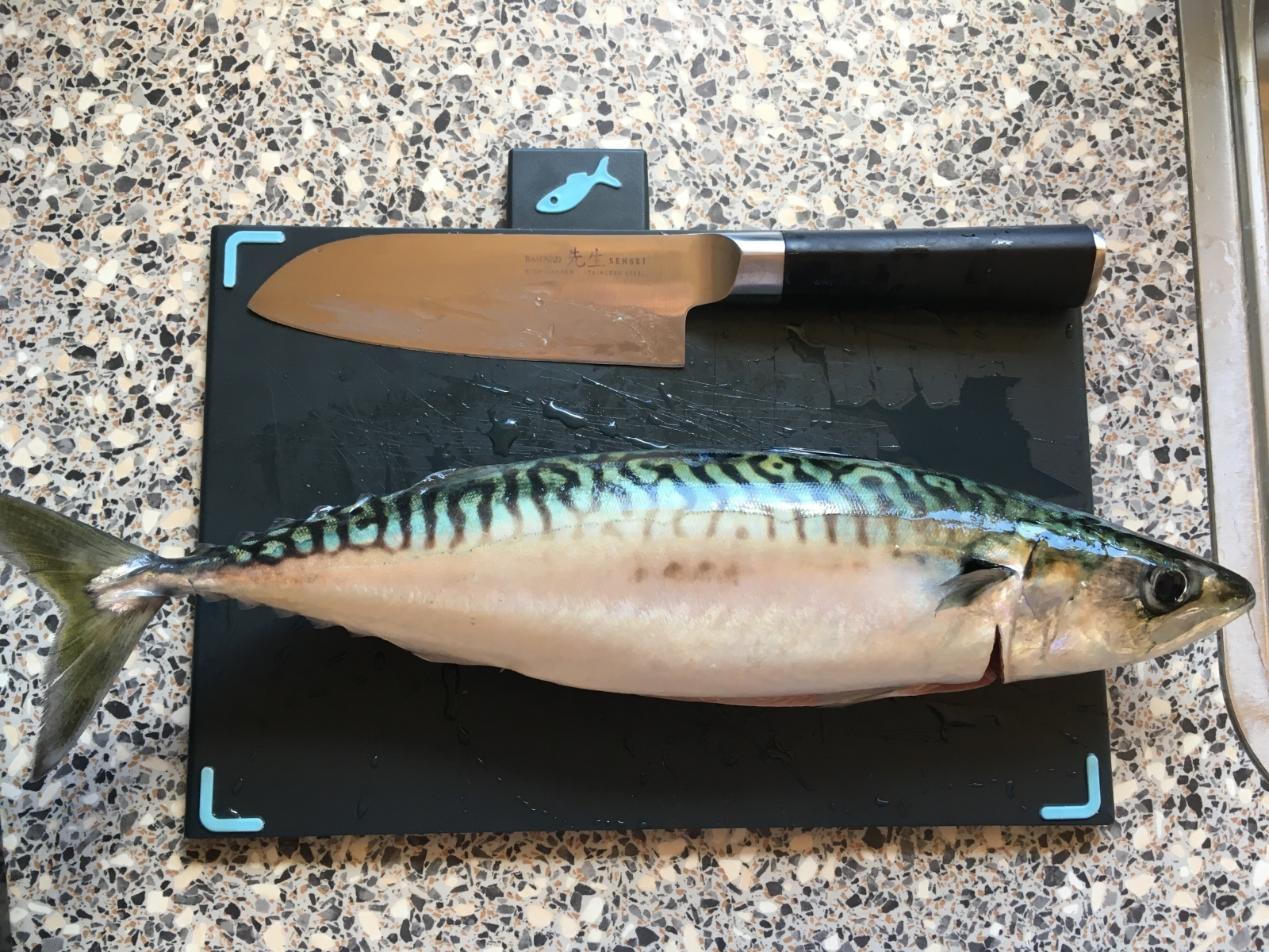 Makrel på 38 cm og 0.60 kg fra Mariagerfjord, Nordjylland -  fanget på Agnfisk # 7295