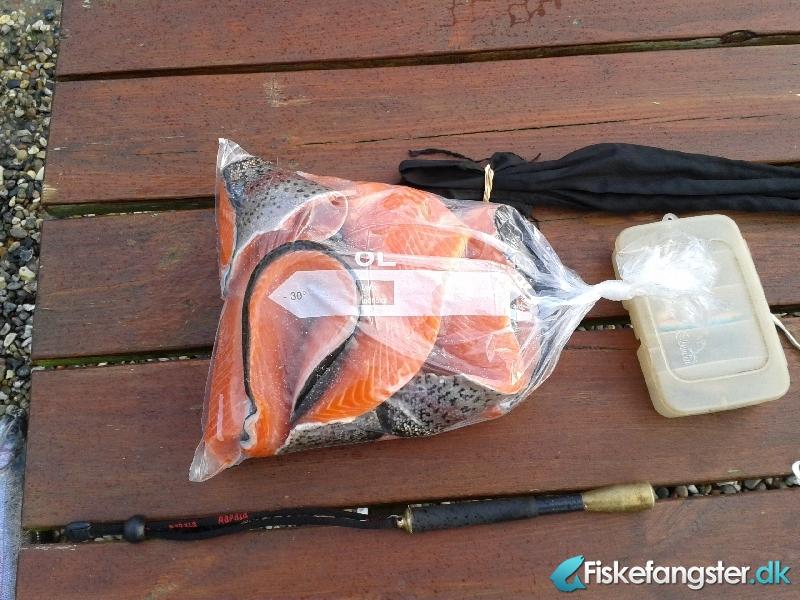 Regnbueørred på 51 cm og 2.10 kg fra Medestedet, Nordjylland -  fanget på Bombarda # 347