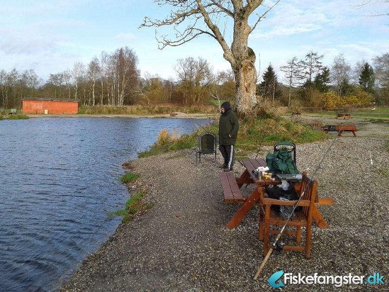 Regnbueørred på 55 cm og 2.40 kg fra Medestedet, Nordjylland -  fanget på Bombarda # 346