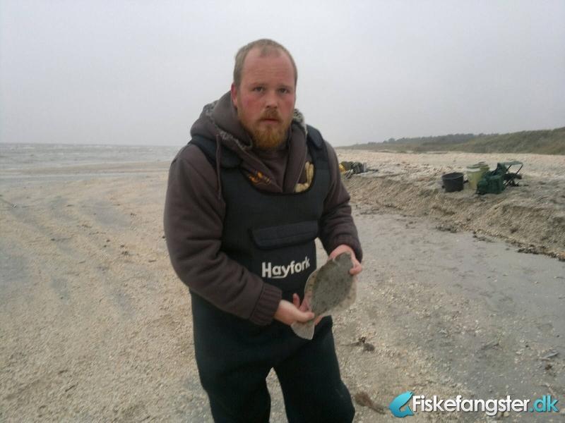 Skrubbe på 33 cm fra Flakvej, Nordjylland -  fanget på Sandorm # 312