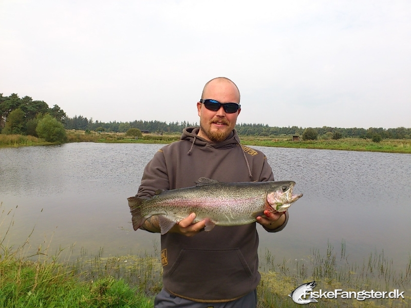 Regnbueørred på 60 cm og 2.40 kg fra hou, Nordjylland -  fanget på Wobler # 189