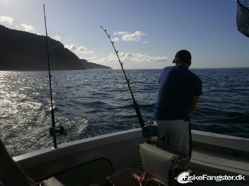 Anden art på 30 cm og 0.50 kg fra Azorerne, Portugal, Udlandet -  fanget på Wobler # 175