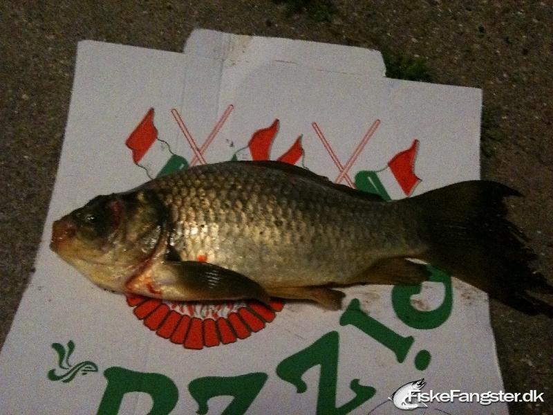 Brasen på 25 cm og 400 gram fra Klingenberg søen, Nordjylland -  fanget på Blink # 70