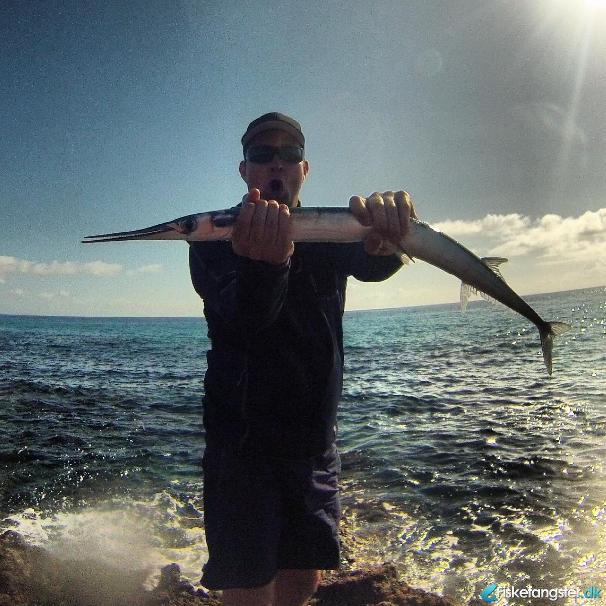 Hornfisk på 105 cm og 4.00 kg fra Fuerteventura(Corralejo), Udlandet -  fanget på Bombarda # 1729
