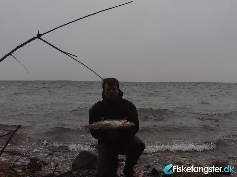 Havørred på 53 cm og 2.10 kg fra korsør lystskov, Sjælland -  fanget på Blink # 751