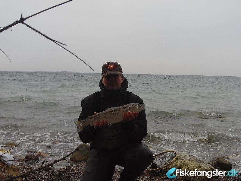Havørred på 53 cm og 2.10 kg fra korsør lystskov, Sjælland -  fanget på Blink # 752